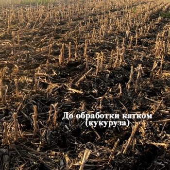 Испытание катка измельчителя 2-х рядного шириной захвата 3м в поле по остаткам кукурузы -